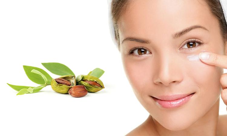 Масло жожоба: полезные свойства и противопоказания, применение в косметологии и других областях
