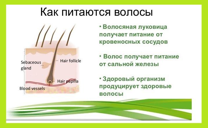 Как остановить выпадение волос: 8 простых шагов