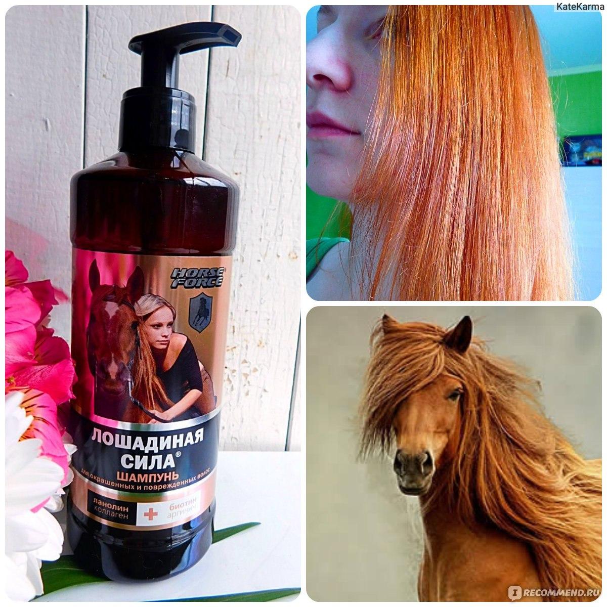 Отзывы о шампуне против выпадения волос «лошадиная сила»